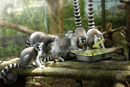 Family Lunch stock photo,  by Norazshahir Razali