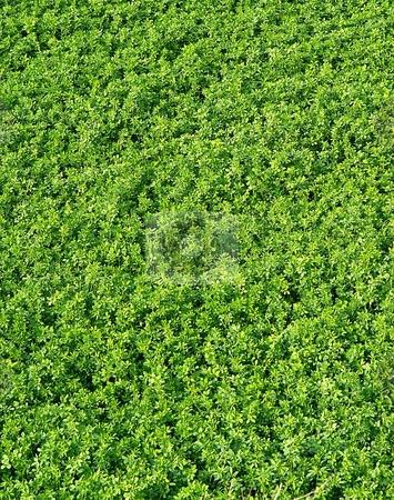 Gerrn background vertical stock photo, Green leaves background by Juraj Kovacik