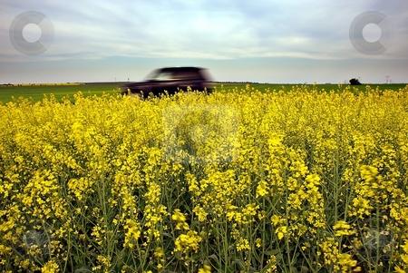 Speeding car stock photo, Speeding car and yellow fields by Juraj Kovacik