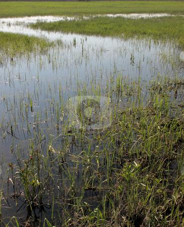 Swamp stock photo, Swamp in sunny day by Juraj Kovacik