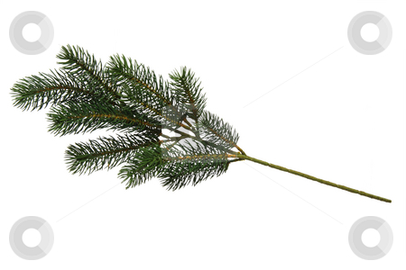 Fir tree branch stock photo, Plastic fir tree branch isolated on white background by Birgit Reitz-Hofmann