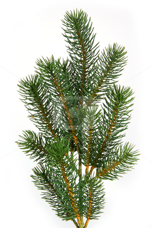 Fir tree branch stock photo, Plastic fir tree branch isolated on white background by Birgit Reitz-Hofmann