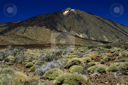 Mountain stock photo, Mountain vegetation by Rui Vale de Sousa