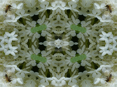 Busy Bee - Background Pattern stock photo, Busy Bee - Background Pattern by Dazz Lee Photography