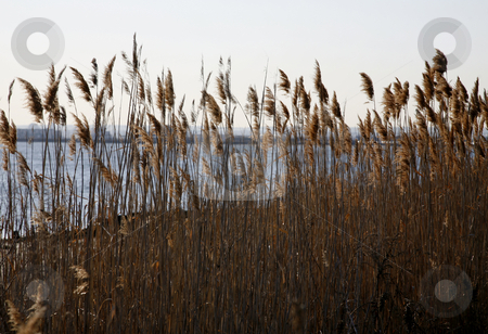 Swamp Grass with Horizon Line stock photo, Swamp Grass with Horizon Line by Terise Slotkin