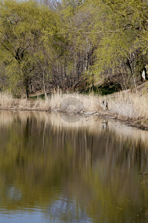 Pond in the Afternoon stock photo, Pond with Afternoon Light by Terise Slotkin
