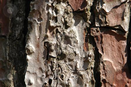 Pinienrinde / Pine bark stock photo, Pinienrinde by Wolfgang Heidasch