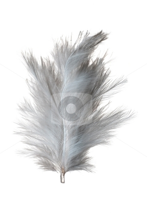 White feather stock photo, White feather isolated on white background. by Gjermund Alsos