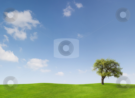 Apple Tree on Meadow stock photo, Apple Tree on a meadow against a blue sky by Jan Martin Will