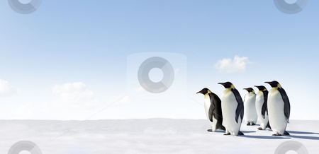 Emperor Penguin stock photo,  by Jan Martin Will