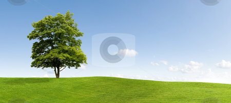 Maple tree stock photo, Maple tree on a meadow by Jan Martin Will