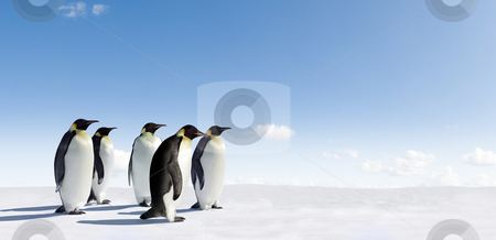 Five Emperors stock photo, Five Emperor Penguins in Antarctica by Jan Martin Will