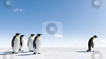 Emperor Penguins stock photo, Emperor Penguin rejected by other Penguins by Jan Martin Will