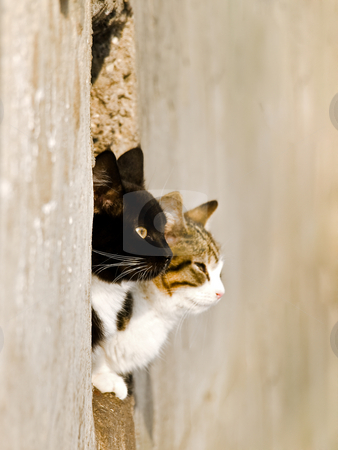 Cats stock photo, Two cats love outdoor in sunny day by Sergej Razvodovskij