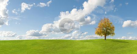 Autumn stock photo, Tree on grass autumn panorama by Jan Martin Will