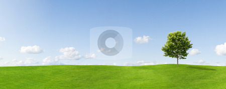 Maple tree on a meadow panorama stock photo, Panorama of a maple tree on a meadow against a blue sky by Jan Martin Will