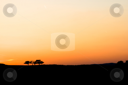 Sunset stock photo, Sunset with three trees by Jan Martin Will