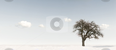Winter stock photo, Winterlandscape with an apple tree against a blue sky by Jan Martin Will