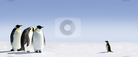 Courage stock photo, Three emperor penguins are met by an adelie penguin by Jan Martin Will