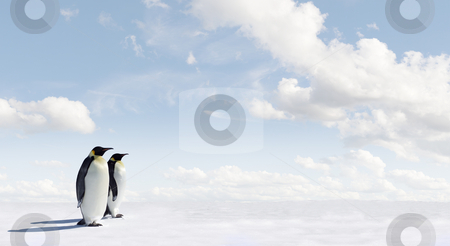 Penguin Panorama stock photo, Penguin Panorama with copy space by Jan Martin Will