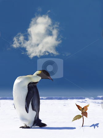 Penguin next to sprouting flower stock photo,  by Jan Martin Will