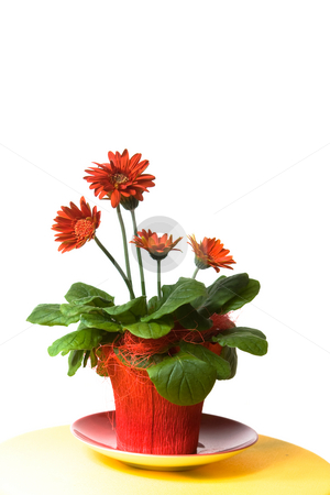 Decoration stock photo, Red flowers in a red flowerpot by Jan Martin Will