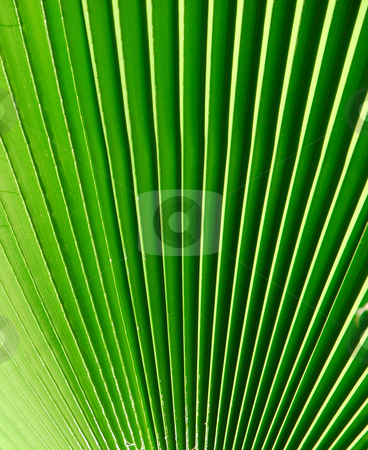 Green background stock photo, Green background from a palm tree by Wolfgang Zintl