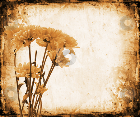 Floral grunge stock photo, Flowers on grunge background by Kirsty Pargeter