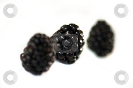 Blackberry stock photo, Blackberries on white background in a group of three. by Henrik Lehnerer