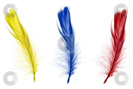 Red blue and yellow feathers stock photo, Red blue and yellow feathers isolated on white background by Gjermund Alsos