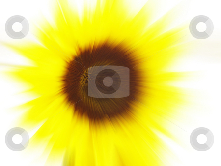 Sunflower blur stock photo, Abstract sunflower blur background by Kirsty Pargeter