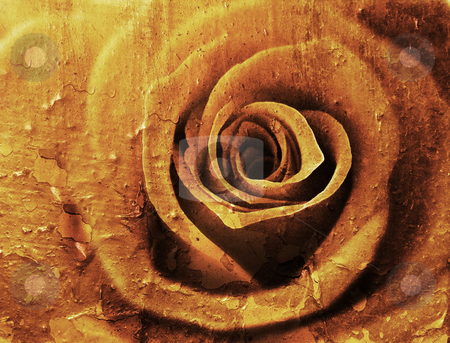 Grunge rose stock photo, Close up of a rose flower with grunge effect by Kirsty Pargeter