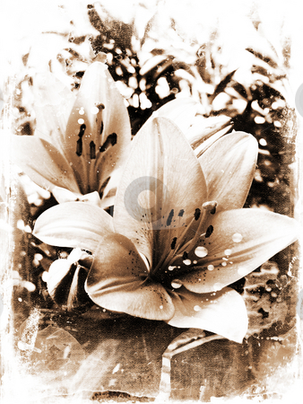 Grunge lillies stock photo, Grunge background of lily flowers by Kirsty Pargeter