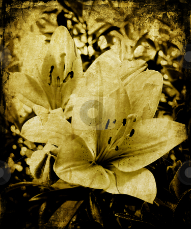 Grunge lillies stock photo, Lillies on grunge background by Kirsty Pargeter