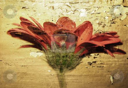 Grunge flower stock photo, Flower photo with grunge texture by Kirsty Pargeter