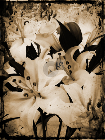 Grunge lillies stock photo, Grunge style image of white lillies by Kirsty Pargeter