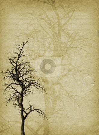 Grunge tree stock photo, Old gnarly tree on grunge style background by Kirsty Pargeter