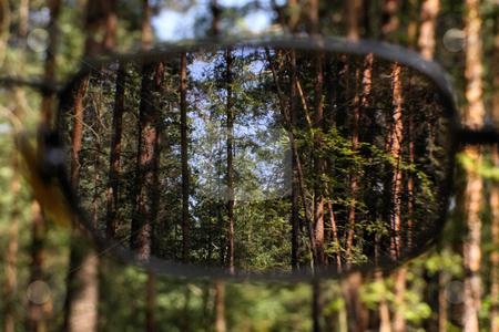 Glasses stock photo, Forest throgh the glasses by Sergej Razvodovskij