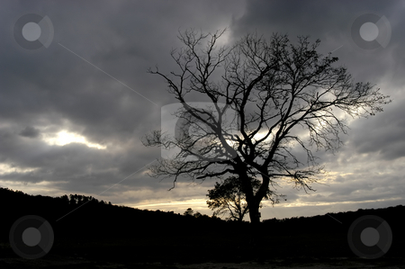 Tree stock photo, Tree in the mountain by Rui Vale de Sousa