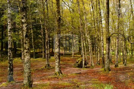 Woods stock photo, Forest detail in the portuguese national park by Rui Vale de Sousa