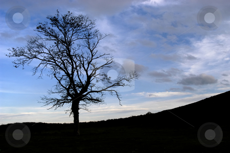 Tree stock photo, Tree in the top of the mountain by Rui Vale de Sousa