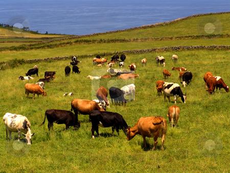 Animals stock photo, Farm animals by Rui Vale de Sousa