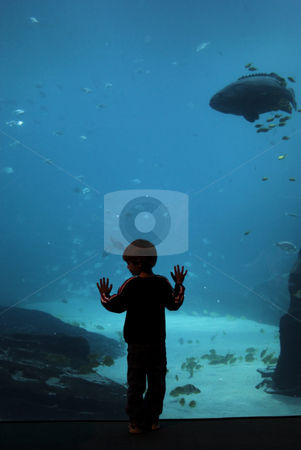Fish view stock photo, A boy stands in front of a large aquarium window looking at the fish by Matt Baker