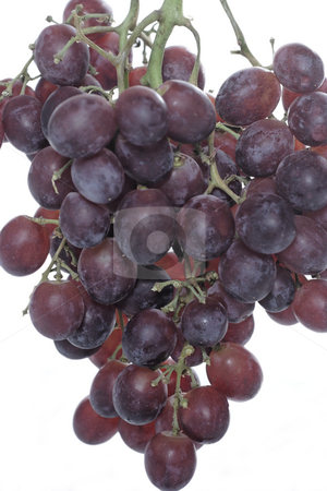 Grapes stock photo, An isolated close up of a vine of red grapes by Matt Baker