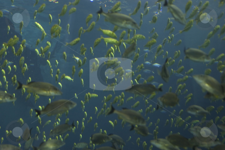 Sea of fish stock photo, Lost in a sea of fish by Matt Baker