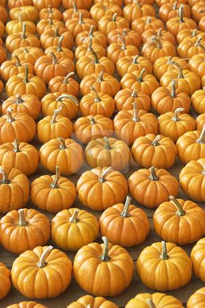 Many many pumpkins stock photo,  by Matt Baker