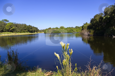 Pretty Lake Scene stock photo, From the banks of Red Bug Slough Preserve in Sarasota, Florida by Steve Carroll