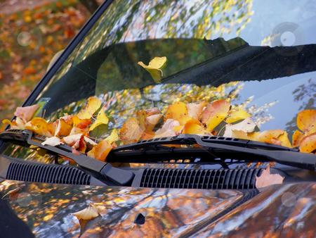 Fall on the car stock photo, Dead leaves on the windshield by Sergej Razvodovskij