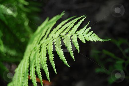Fern stock photo, Close-up bright fern against dark background by Leyla Akhundova