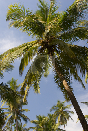 Palm trees stock photo, Palm trees by Andrey Butenko